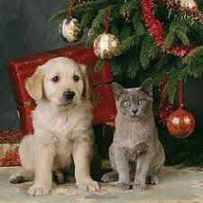 dog and cat by Christmas tree